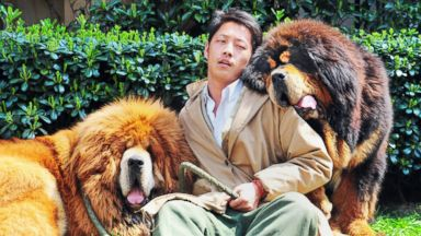 "PHOTO: An unidentified man poses with two Tibetan mastiffs after they were sold at a ""luxury pet"" fair in Hangzhou, in eastern Chinas Zhejiang province."