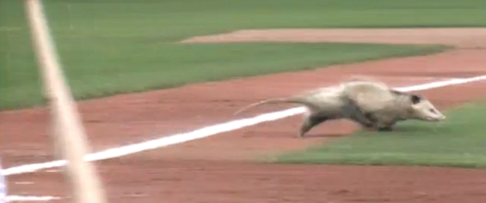 PHOTO: An opossum runs onto the field during a minor league baseball game between the Quad Cities River Bandits and Clinton LumberKings in Davenport, Iowa, July 30, 2014.