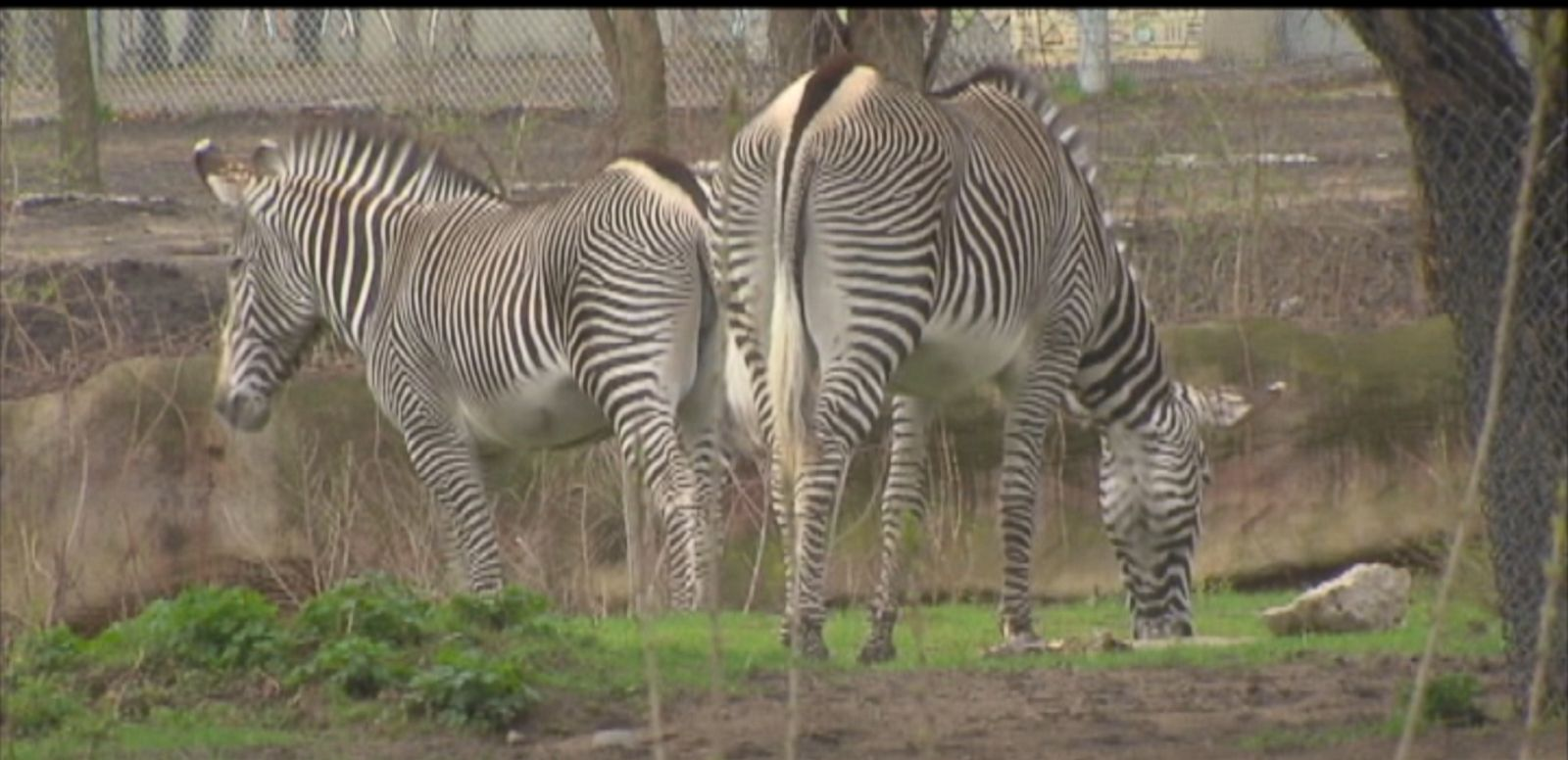 VIDEO: The zoo is planning to turn manure into reusable energy.
