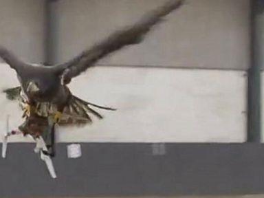 Watch:  Birds of Prey Hunt Drones