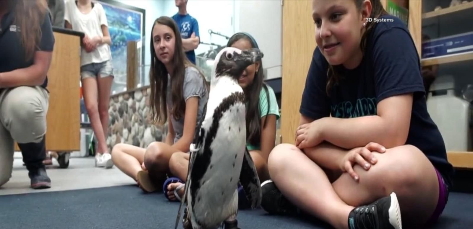 VIDEO: Injured Penguin Gets Back on Her Feet