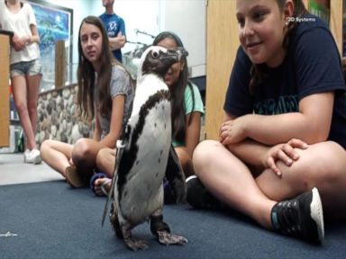 WATCH:  Injured Penguin Gets Back on Her Feet