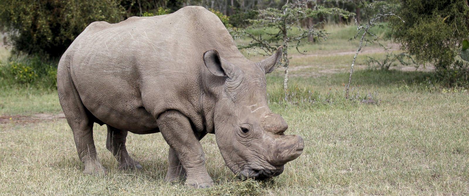 news world male rhino tinder dating