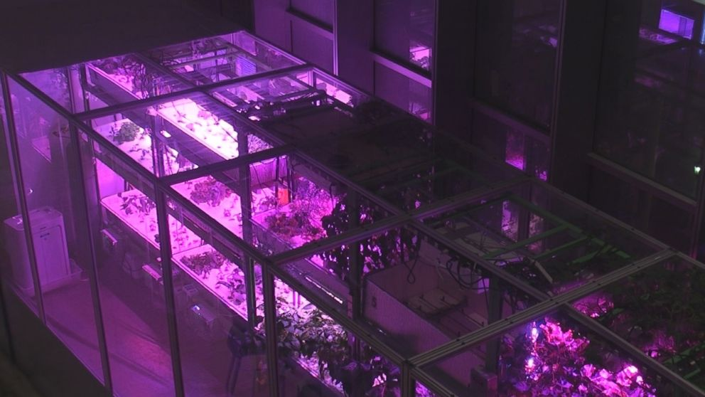 PHOTO: One of Caleb Harper's scalable Food Servers that uses hydroponics and aeroponics to grow food.