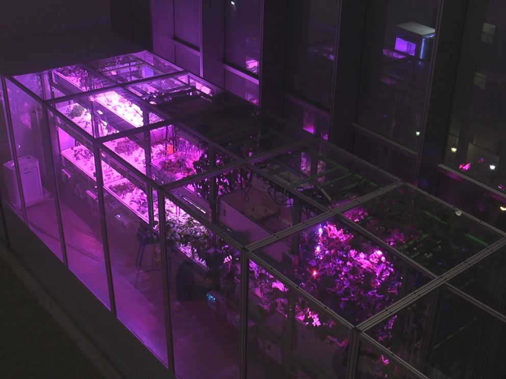 PHOTO: One of Caleb Harpers scalable Food Servers that uses hydroponics and aeroponics to grow food.