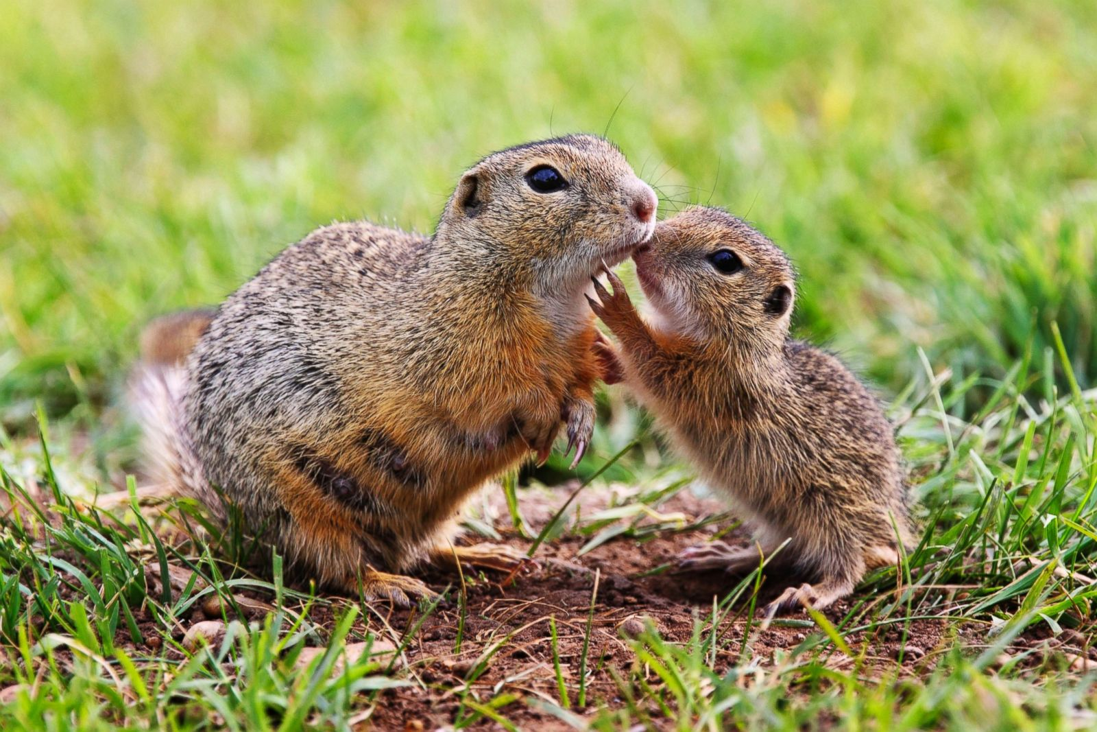 Image result for animal mothers
