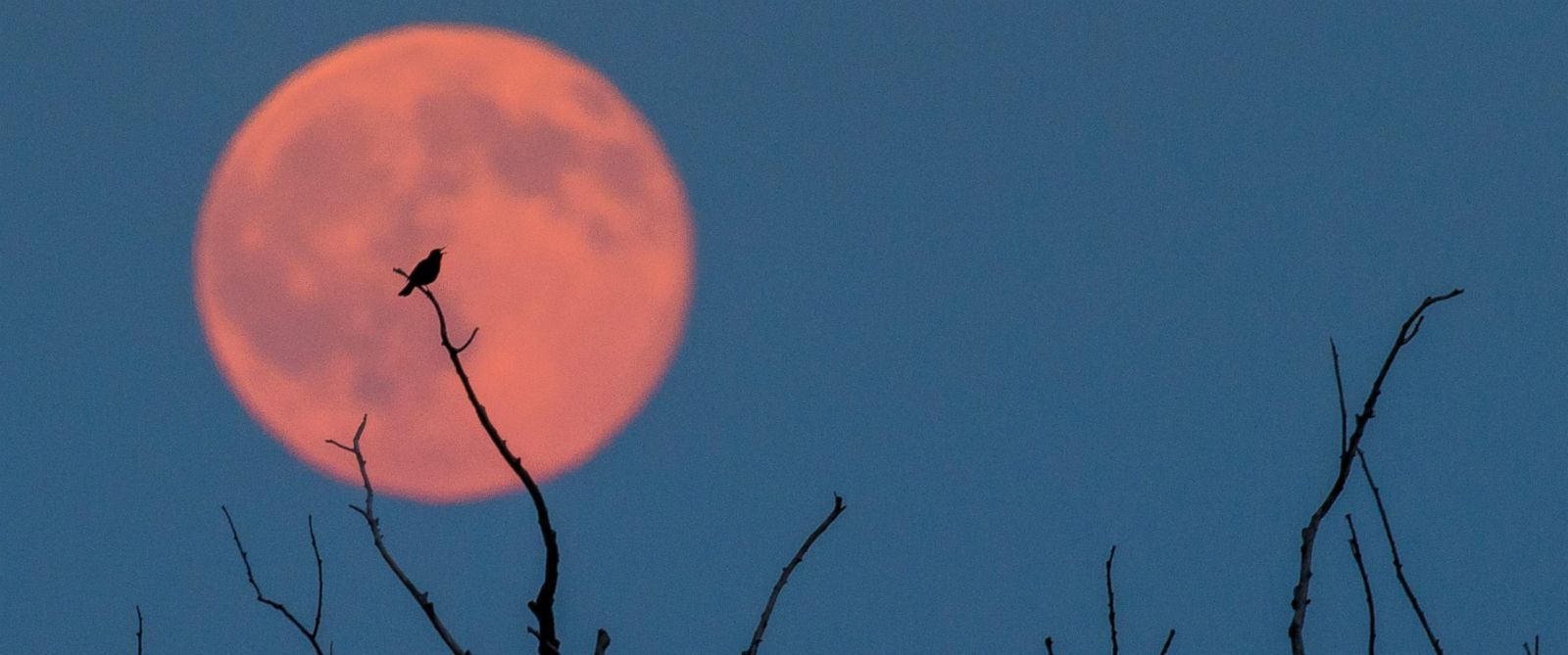 39 Strawberry Moon 39 Lights Up Sky In Rare Lunar Event Abc News
