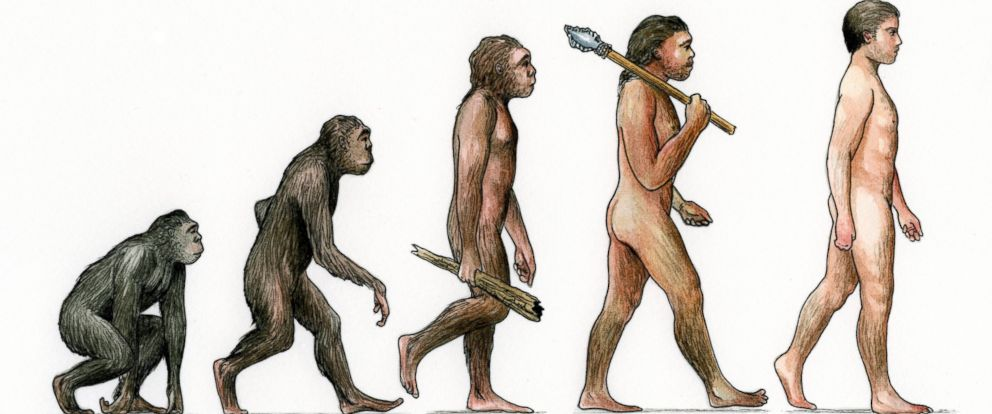 """PHOTO: An illustration of the """"Evolution of Man."""""""