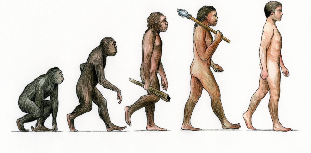 PHOTO: An illustration of the Evolution of Man.