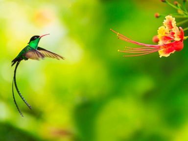How the Clever Hummingbird Tortures Scientists