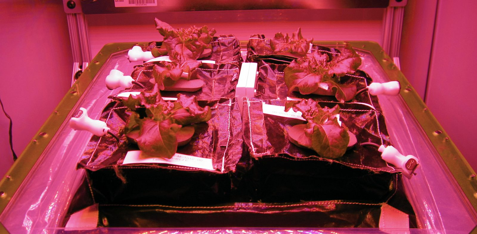 PHOTO: ISS astronauts will soon get to try their hands at gardening when VEGGIE arrives at their airlock.