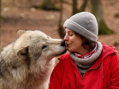 Why Wolves Became Dogs