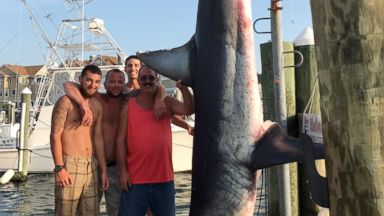 Fishing crew catches 926-pound shark off New Jersey coast