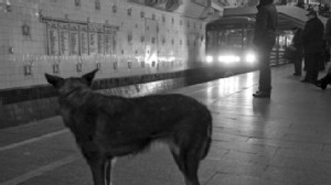 VIDEO: Russian scientists describe the strays commuting skills and panhandling tactics