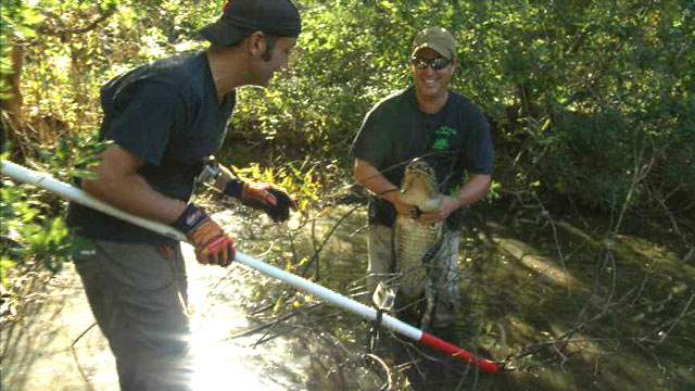 "PHOTO: ""Swamp Brothers"" Robbie and Stephen Keszey chasing after some of the countrys nastiest creatures without any protective gear for their reality TV series on Discovery Channel."