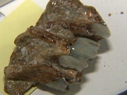 Video: Utility workers find million-year-old fossils.