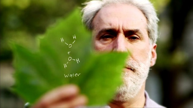 VIDEO: The Artificial Leaf