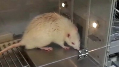 VIDEO: A rat taste tests liquids in Opertechs machine in order to help the company find new flavors.