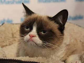 Grumpy Cat: The Internet's Favorite Sour Cat Draws Crowds at SXSW