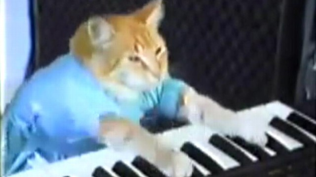 VIDEO: Internet feline creators are suing for unauthorized use of their product in a video game.