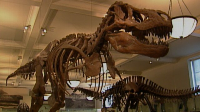 VIDEO: Study suggests dinosaurs produced huge amounts of greenhouse gas methane.