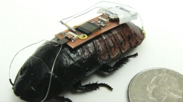VIDEO: North Carolina State University researchers say cockroaches could be used to find disaster victims.