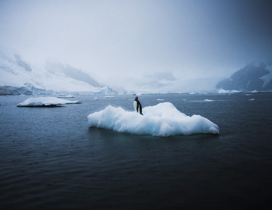 Photo: Sebastian Copeland in Antarctica.