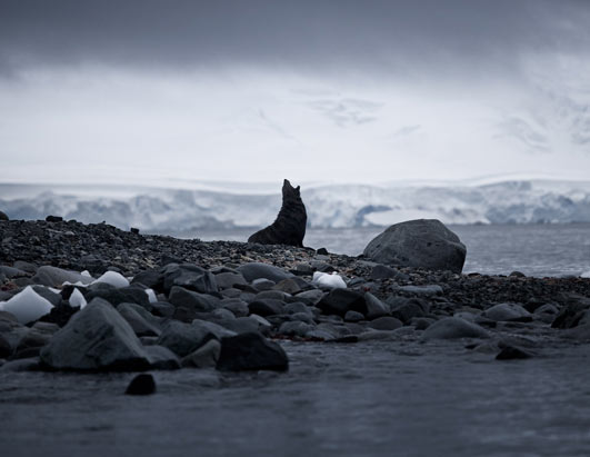 Photo: A seal in endangered Antarctica.