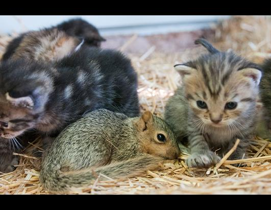 Orphaned Squirrel Adopted by Cat Family