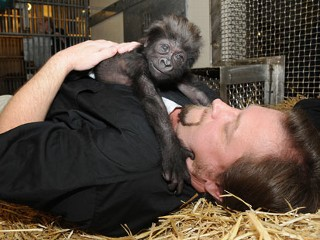 Zoo Workers Mother Abandoned Baby Gorilla