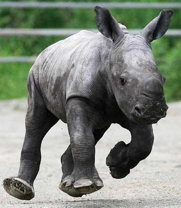 Animals Battle Extinction