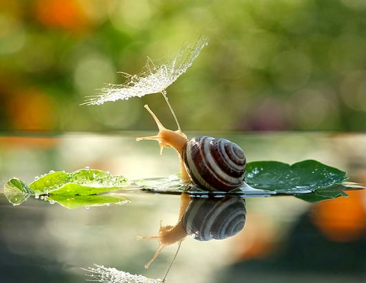 Snail Shelters from Rainfall Under Umbrella
