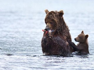 Photos: Baby Bear Just Wants Some Salmon