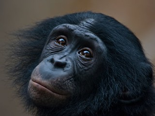 Do We Need God to be Moral? Ask the Apes