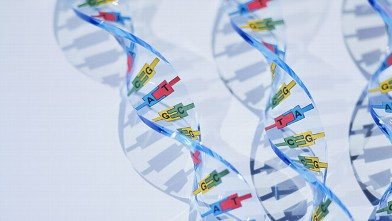 PHOTO: DNA