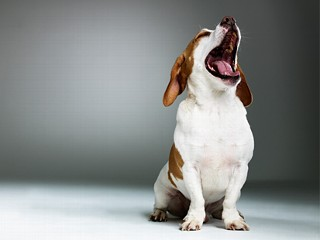 Bone Tired: You Yawn, So Does Your Dog