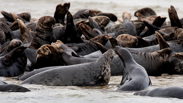 Seals Galore: Protective Law Works