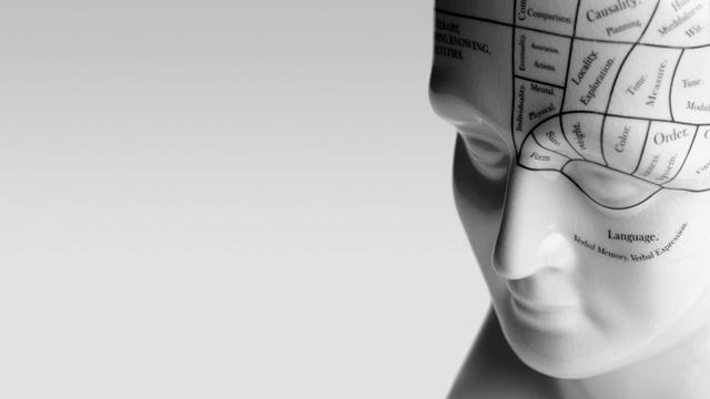PHOTO: Phrenology head