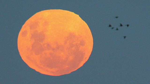 Supermoon This Sunday: Look Out the Window to See Brightened Sky ...