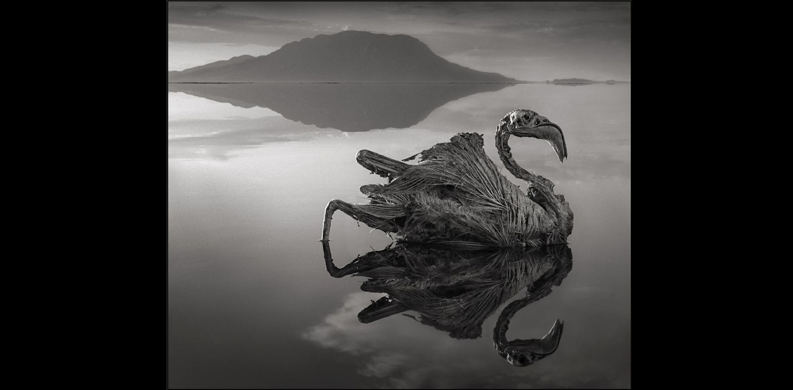PHOTO: Calcified Reflected Flamingo, Lake Natron, 2010