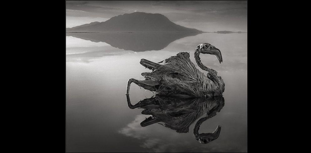 PHOTO: Calcified Reflected Flamingo, Lake Natron, 2010
