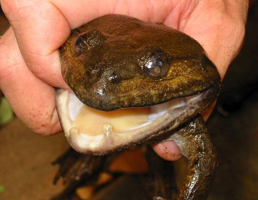 New Mekong Species