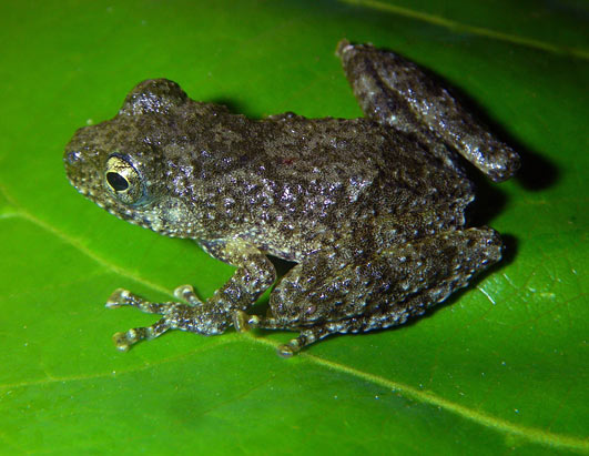 New Mekong Species