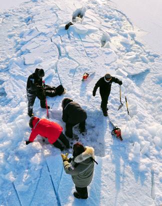 Arctic Ice  Cap