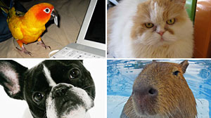 Photo: Animals Unleashed: Twitter Goes to Dogs, Cats, Birds and More: Pet owners tweet updates from perspective of cats, dogs, even large rodents.