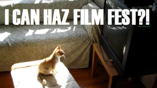 first internet cat video festival being held today in minneapolis cat video 640x360