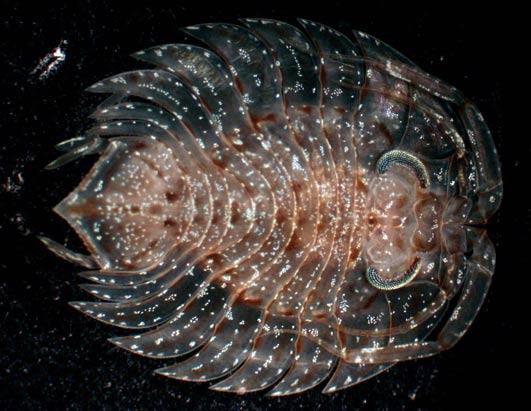 New Species In Antartica
