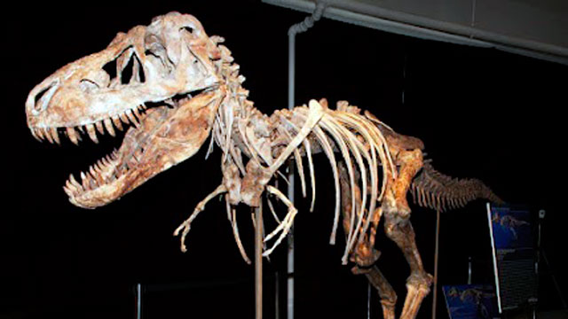 PHOTO: An 8-foot-tall, 24-foot-long tarbosaurus ? a cousin of the Tyrannosaurus Rex ? is at the heart of legal battle between Heritage Auctions and the president of Mongolia.