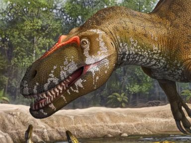 Europe's Biggest Dino Predator Found
