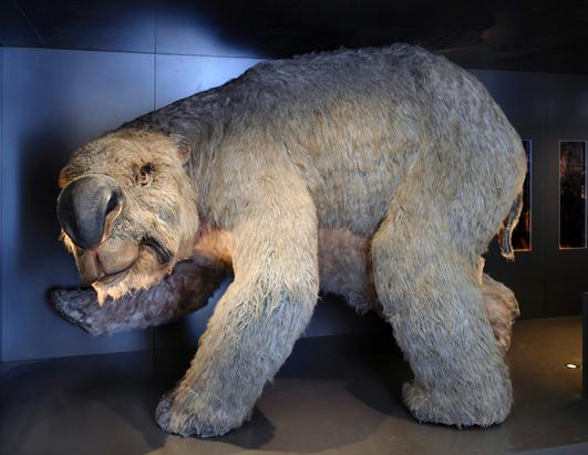 Massive, Ancient Wombat Discovered